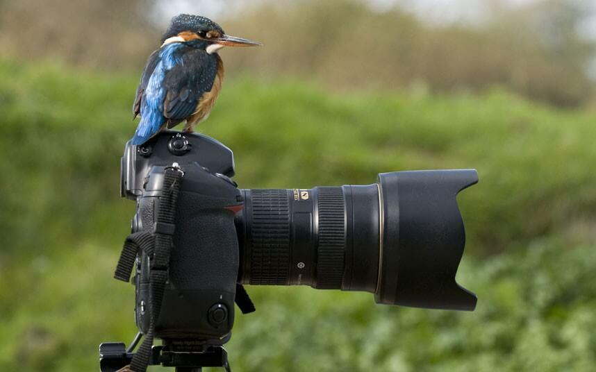 какой другой камера для фотографирования птичек принял отставку давутоглу